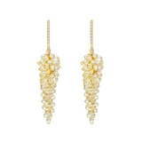 Briolette Yellow Diamond 'Grape' Cluster Drop Earrings