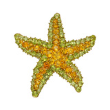 Citrine & Peridot Starfish Brooch